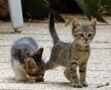 00203 - Hey, leave my leg alone... | Cats / Israel