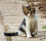 00218 - Mama, tell him to stop this flashes... | Cat / Israel
