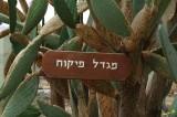 01283 - Control tower sign / Rosh-Pina airport - Israel