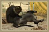 02669 - Can you scrub my back? | ? / Monkeys park - Israel