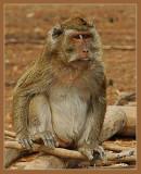 02676 - The chief... | ? / Monkeys park - Israel