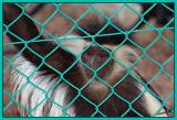 02708 - Sad... | ? / Monkeys park - Israel