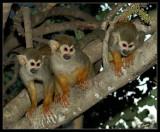 02750 - The 3 monkeys | ? / Monkeys park - Israel