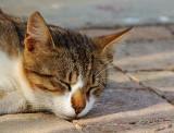 04030 - Sleepy cat / Tel-Aviv bay - Israel