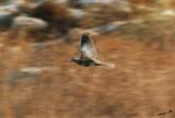 05044 - Palm Dove / Crocodile river - Israel