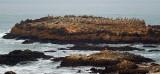 05300 - Seagulls island... / (from) Rd. 1 - CA - USA