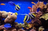 05335 - ? / Monterey bay aquarium - CA - USA