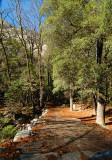 05449 - The trail to... ;-) / Yosemite NP - CA - USA