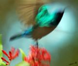 05587  - Hummingbird abstract... ;-) / Ganey-Tikva - Israel