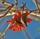 05591 - Hummingbird baby / Ganey-Tikva - Israel