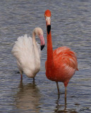 10958 - Flamingo / Safari zoo - Ramat-Gan - Israel