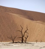 11678 - Dead tree in the Dead Vlei between the dunes / Sossussvlei - Namibia