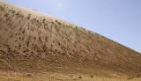 11681 - The dunes / Sossussvlei - Namibia