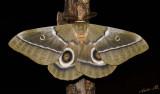 12047 - Moth / Cheetah park - Namibia
