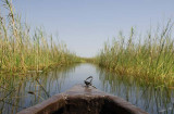 12301 - Kano sailing / Okavango Delta - Botswana