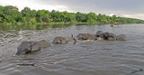 12607 - Swiming in a line... | Elephants / Chobe river - Botswana
