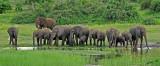 12664 - Everyone drinking... | Elephants / Chobe river - Botswana