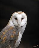 13418 - Owl / Snake park - Arusha - Tanzania