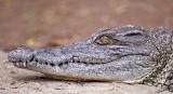 13476 - Crocodile / Snake park - Arusha - Tanzania