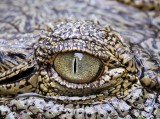 13478 - Looking in your eyes... | Crocodile / Snake park - Arusha - Tanzania