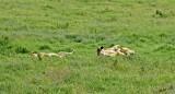 13595 - Typical position... | Lions / Serengeti - Tanzania