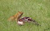 14045 - Lions cub with some food... | Lion / Masai Mara - Kenya