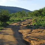 14124 - Main road in Masai Mara / Masai Mara - Kenya