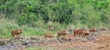 14788 - Warthogs / The David Sheldrick Wildlife Trust - Nairobi - Kenya