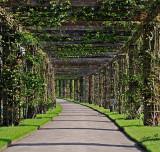 15029 - The trail... / Kew Gardens - Richmond - England