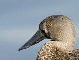 15040 - Duck portrait | Duck / Kew Gardens - Richmond - England