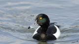 15068 - Duck / Kew Gardens - Richmond - England
