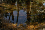 Island's fresh water pond
