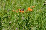 Prairie Meadow