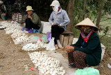 Vendeuses d'oeufs - Le Mat - Vietnam
