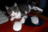 J'adore les souris...