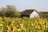 Cabane de vigne, abandonnée