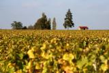 Loge de vigne, dans la vallée du Cher