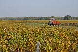 Vignes à Oisly (41-France)