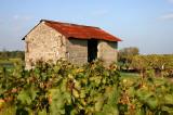 Loge de vigne à l'abandon