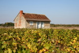Loge de vigne bien entretenue