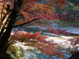 The Color of Okutama River, west Tokyo, Japan