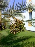 Al-Khor Compound, Qatar
