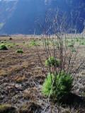 Offroad di Kaldera TN Bromo Tengger