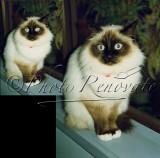 Retouching - Pet Eyes