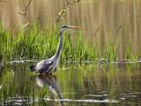 Water Birds etc