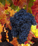 One stunning bunch of grapes!!