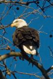 Mid-Atlantic Eagle Photos Shoot - 24 & 25 Nov 2006