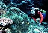 Diver3.jpg