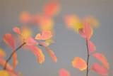 last color.jpg