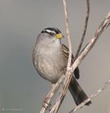 Passerine (Perching) Birds